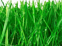 Organic Fresh Grass Supplies Sydney