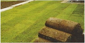 5 Types of Turf and Their Qualities