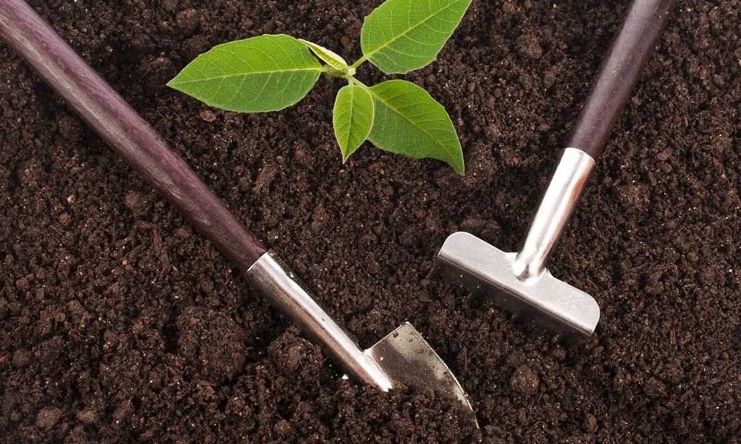 6 Secrets to Build Healthy Soil for Your Garden