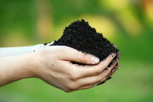 Why Soil is the Most Important Thing in Your Garden