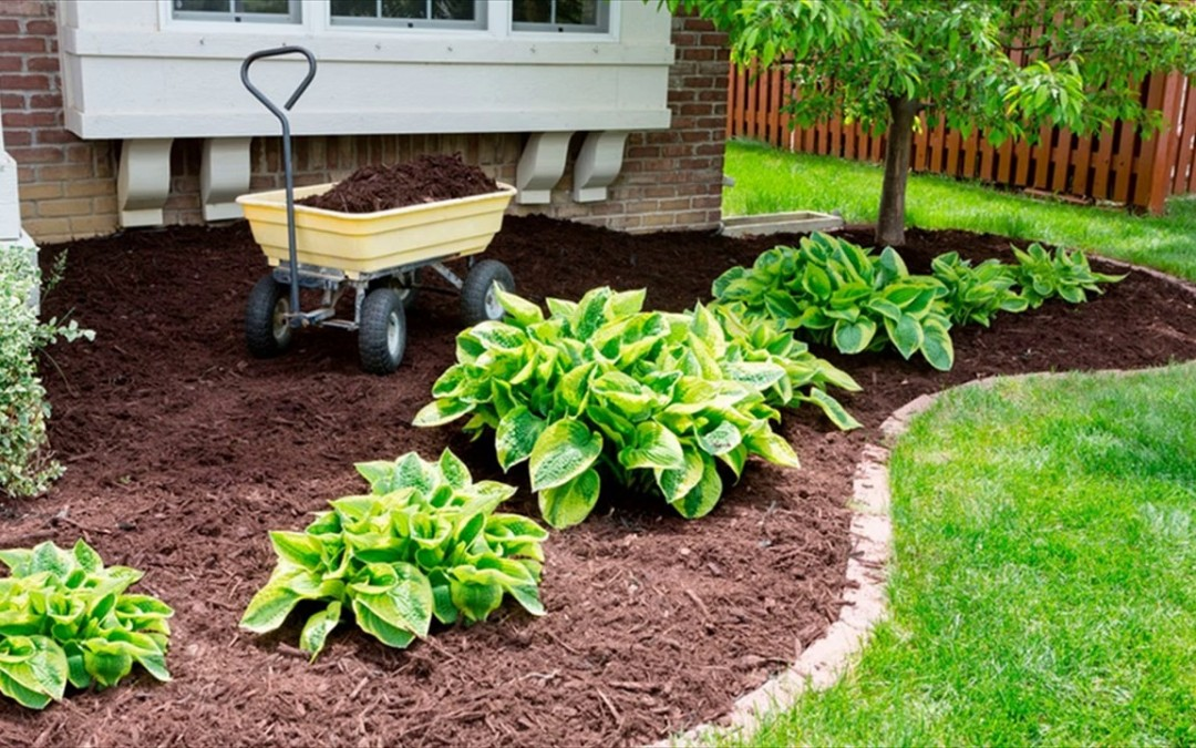 8 Reasons Why You Should Mulch Your Garden